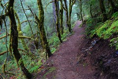 Waters Creek Trail (~Mike Potts Photography~) Tags: rain misty oregon moss coastalmountains temperaterainforest siskiyoumountains waterscreek riparianzone primevalforestgroups pfmoss