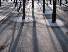 With wet feet (johan van moorhem) Tags: wood trees sun snow ice bomen belgium sneeuw belgi bos flanders zonlicht ijs vlaanderen bulskampveld