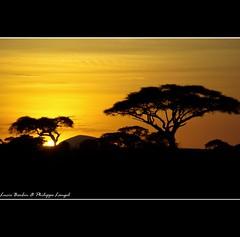 Sunset III - Amboseli National Park - Kenya (Lucie et Philippe) Tags: voyage africa travel sunset sun elephant landscape soleil nationalpark kenya coucher sunsets safari paysage animaux coucherdesoleil afrique amboseli mygearandmepremium mygearandmebronze
