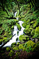 Cateract falls on Mt Tam in Marin : slow water (tibchris) Tags: green water waterfall nikon slow waterfalls mttam d700 tibchris panoramafotogrfico arcticpuppy snapchris wwwsnapchriscom