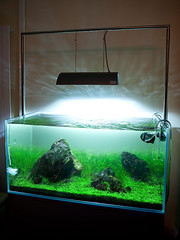 90cm Planted Fish Tank - February Update (Stu Worrall Photography) Tags: light fish green metal ada 1 solar tank stu na nag planted worrall halide 90p 150w 90cm stuworrall