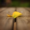 precipice (helen sotiriadis) Tags: wood brown macro yellow closeup canon table leaf published dof bokeh pov perspective gap depthoffield picnik precipice canonef50mmf14usm canoneos40d toomanytribbles dslrmag updatecollection