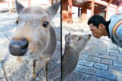 Nippon | deer (Kerb ) Tags: japan deer nippon persons nara kerb happytime   fujixtra400 goldenhalf weiin 24 goldenhalffilm004 3740 kerbwang