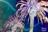 Tripix Designs 0001 - The Palm Tree Effect (naikmichel) Tags: wallpaper colorful designs fractals trippy psychedelic michel naik hdr desktopwallpaper trippystuff fractalart desktopwallpapers coolwallpapers computerwallpapers landscapeimages psychedelicposters beautifulwallpapers mobilewallpapers psychedelicfractals freewallpapers trippypsychedelic ipodwallpapers thepalmtreeeffect naikmichel fractalgalleries psychedelicbackgrounds psychedelicwallpaper psychedelicdesktop psychedelicimages fractalposters psychedelicvisuals psychedelicshop trippywallpapers psychedelicwallpapers trippyposters trippyfractals tripixdesigns0001 ipadwallpapers