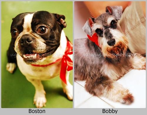 BostonBobby