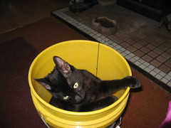 Jake in a bucket