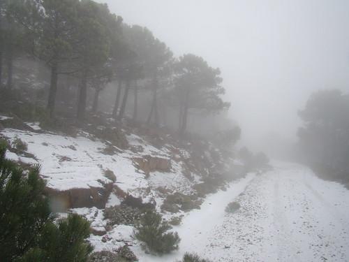Los Reales nevado (6)