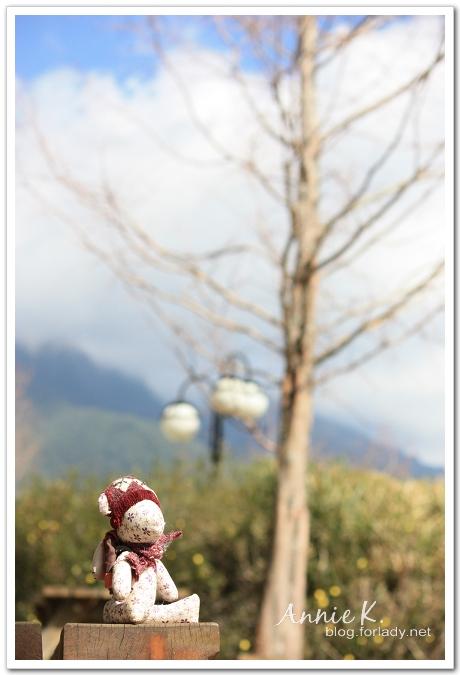 武陵鳥小熊