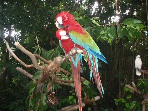 parrots in singapore zoo