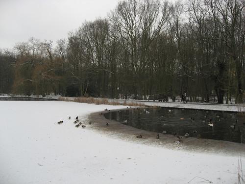 Frozen Leidse Hout pond