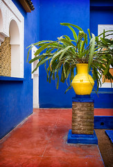 Plant On A Pedestal (duncmc) Tags: blue red yellow morocco maroc marrakech marrakesh jardinmajorelle   majorellegarden