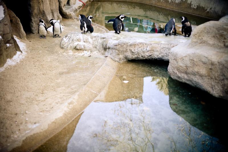Zoo (7 of 15)