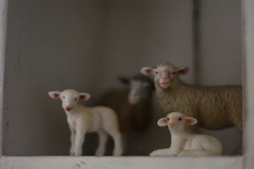 Sheep on the shelf