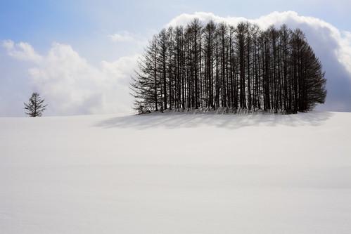 マイルドセブンの林