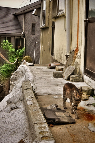 2Cats Onomichi HDR