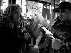 OSAKA: SAFARI (ANALOG TATTOOERS) Tags: max japan analog lion safari booze osaka dolberg adrianlee g9 mattshamah