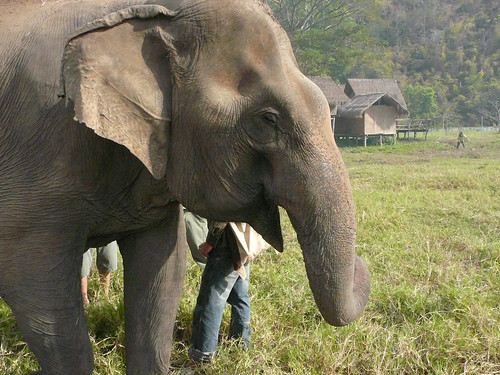 The blind lesbian elephant