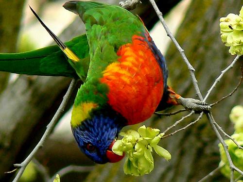 Жизнь продолжается: из жизни райских птиц.