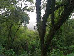 RIMG6105x1000 (Weltbummler) Tags: yerbabuena tucumn bosquenublado nuboselva