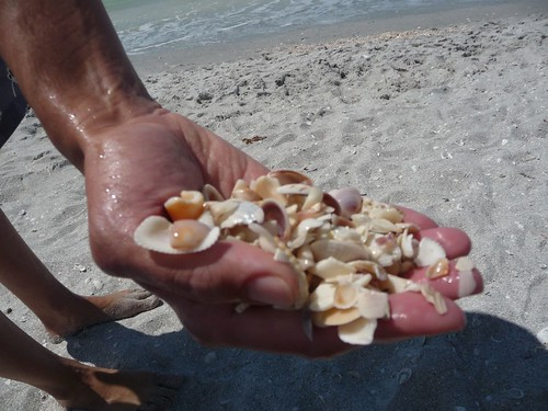 handful of shells.
