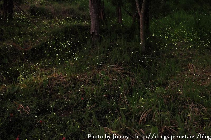 嘉義 瑞里 螢火蟲