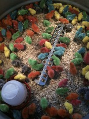 Not a bowl of Fruity Pebbles... (L. Sanders) Tags: chicken colors birds eat chicks feed multicolored iphone