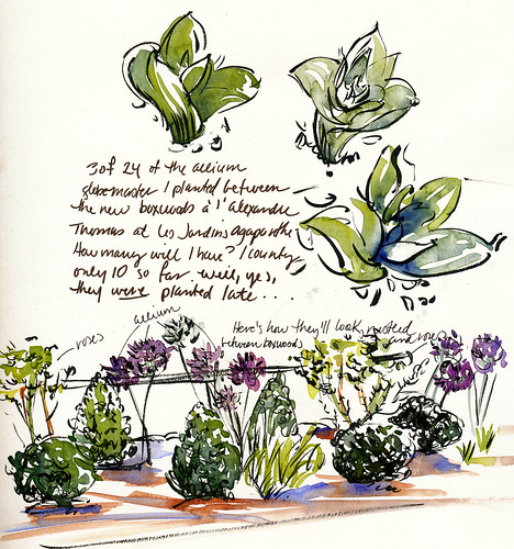 Garden journal, boxwoods & alliums