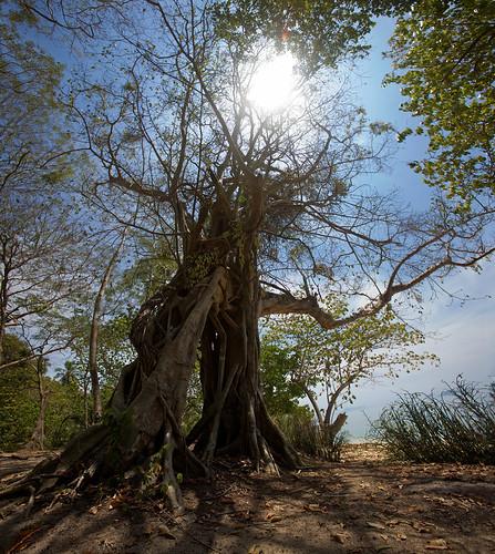 final big tree