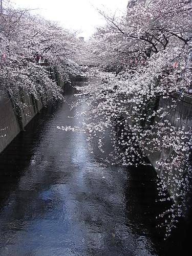 RIMG1392 目黒川 桜 Meguro-Ku Tokyo Japan