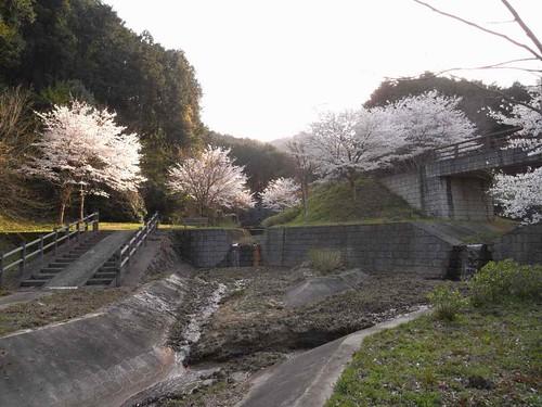<桜>当麻寺奥の公園-03