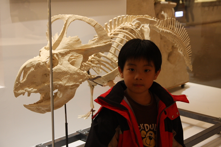 中正廟恐龍展000032