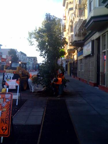 Valencia St trees