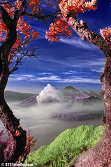 Dreamland (Infrared) (2121studio) Tags: nature indonesia ir artwork nikon nikond50 ali malaysia paintingwithlight infrared framing worldcup indah shakira kuantan melayu alam erupting renewableenergy mountbromo exploreinteresting malaysianphotographer wakawaka meganfox visualartist jatim indonesianvolcanoes topimage imageforsale convertedinfraredcamera 2121studio karyaseni visitindonesia kuantanphotographer pahangphotographer alexmccord ciptaanallahswt malaysianinfraredphotographer artisticinfrared obyekwisata gununggunungberapiindonesia 0139342121 1malaysia gambaruntukdijual lukisanalam indonesiapopulartouristspot nintendo3ds khayalandreamfantasy wonderlandavatar bestamazingwonderful beautifulcantik probolingojawatimur fascinatingindonesia bromotenggersemurunationalpark bromoijensurabayatravel2010 smokingmountbromo photographerdreamspot gunungbromomahumeletup