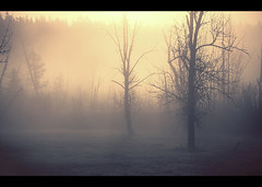 Above Sportsman (sparth) Tags: seattle morning trees fog early washington silhouettes minimal redmond sportsman sammamish sportsmanpark