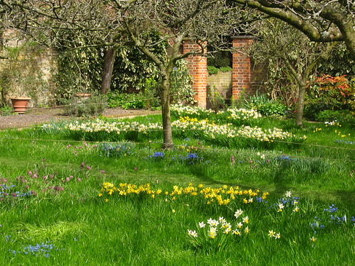 Spring meadow in the orchard garden at Fenton House, Hampstead