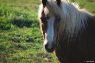 Galerie portrait chevaux