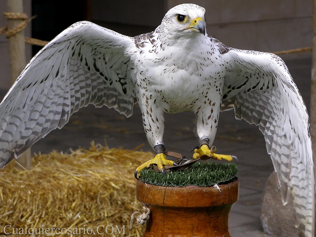 Aves extraordinarias IV - Toma II