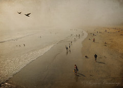 Into the Mist (SLEEC Photos/Suzanne) Tags: ocean texture beach fog surf seagull sealbeachcalifornia flypapertexture skeletalmessshadowhousecreationstexture