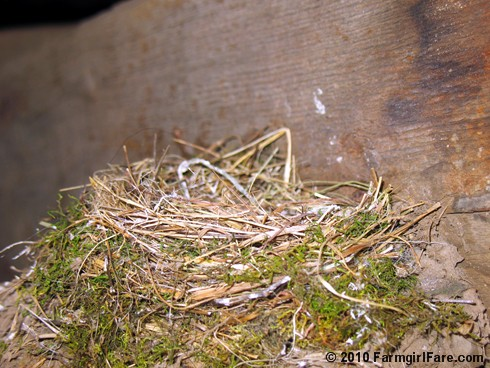Phoebe Nest in Sheep Barn on 6-8-08