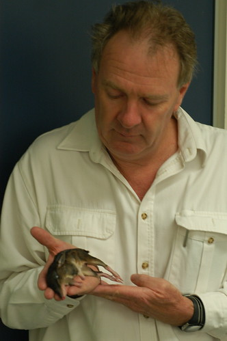 Doug Beckers with drowned juvenile Northern Brown Bandicoot