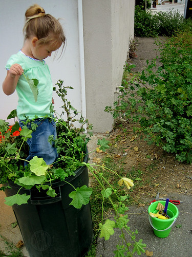 stuffing the weeds in the trash can