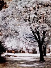 Trees This Morning (DaraDPhotography) Tags: trees texture nature spring scenery infrared lightroom cs4 awardtree artistictreasurechest daarklands magicunicornverybest selectbestfavorites sailsevenseas trolledproud thepyramidgroup seimsnakedtextures
