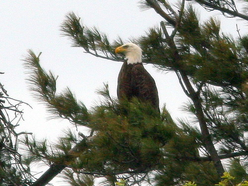 Second Eagle 20100501