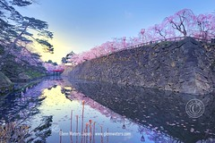 Hirosaki Castle in Spring.   Glenn Waters. Japan.  Over  13,000 visits to this photo. Thank you. (Glenn Waters in Japan.) Tags: bridge castle japan reflections japanese spring nikon aomori  getty  sakura cherryblossoms hirosaki  moat matsuri japon edo   japanesecastle     hirosakicastle d700 nikond700  glennwaters nikkorafs1424mmf28 photosjapan