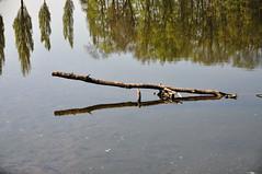 Reflets (Diegojack) Tags: eau reflets paysages rivires
