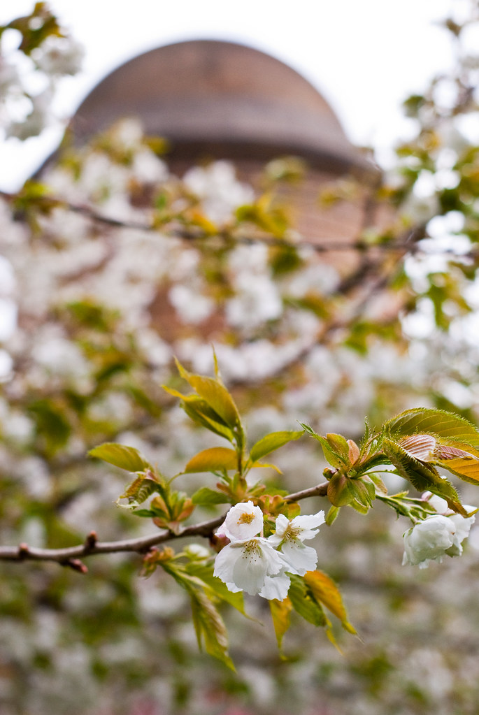 030510_ Blossom #5