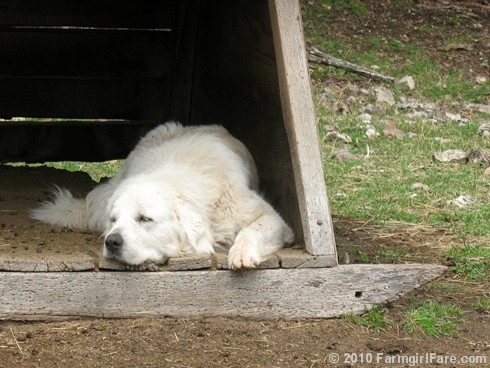 Lazy Daisy 1