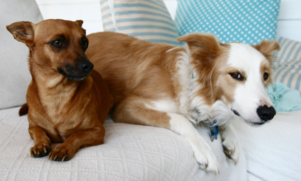 Pip and Maisie2-2