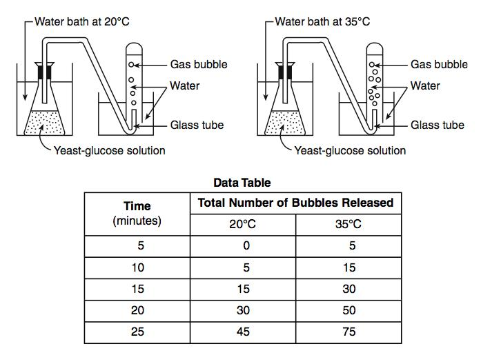 affect of temperature on yeast respiration The effect of temperature on the anaerobic respiration of  to investigate the effect of temperature on the rate of  respiration in yeast experiment (temperature.