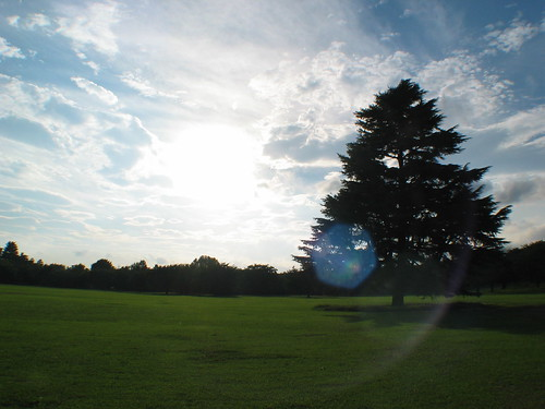 [フリー画像] 自然・風景, 樹木, 日本, 201005210300